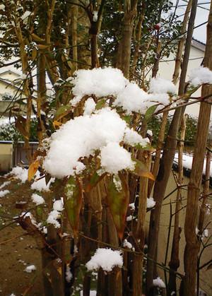 柔らかい春の雪なんでしょうか