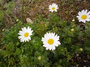 育てやすい花です