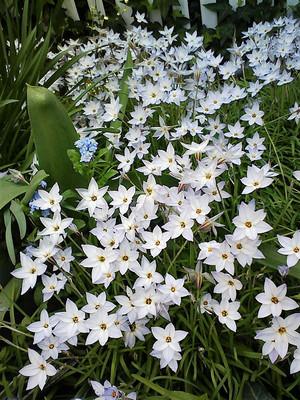 星形の花が    かわいい!
